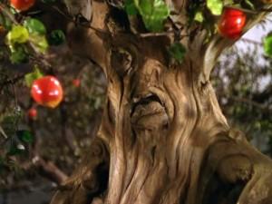 grumpy apple tree